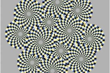 fly-optical-illusion-neuroscinewe-370x247.jpg