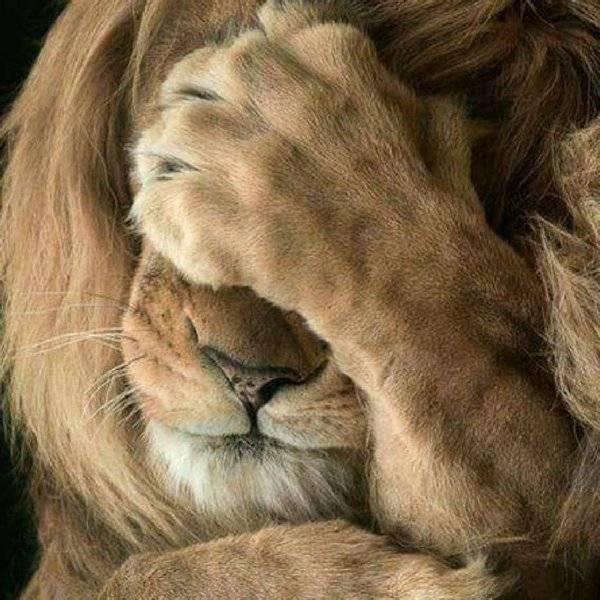 Lion OMG.jpeg