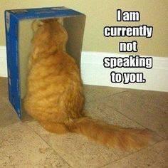 Not Speaking.jpg